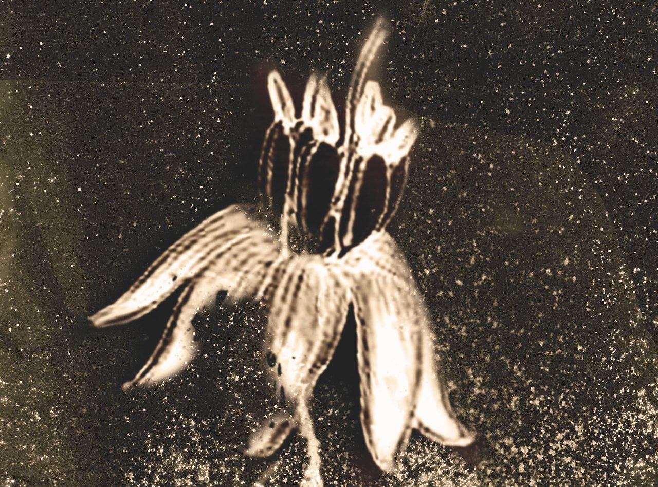 Immagine tratta dal libro