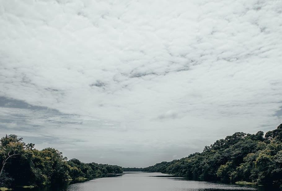 Un fiume nella foresta amazzonica