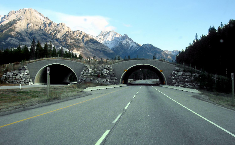 Un tratto della Trans-Canada Highway nel Banff National Park, in Canada. Il passaggio per la fauna è un elemento architettonico di rewilding.